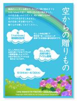 rainbow09.jpg
